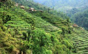 ネパール段々畑2